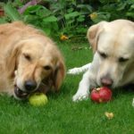 Is your guilt-ride tempting you to feed your dog with your favourite fruit